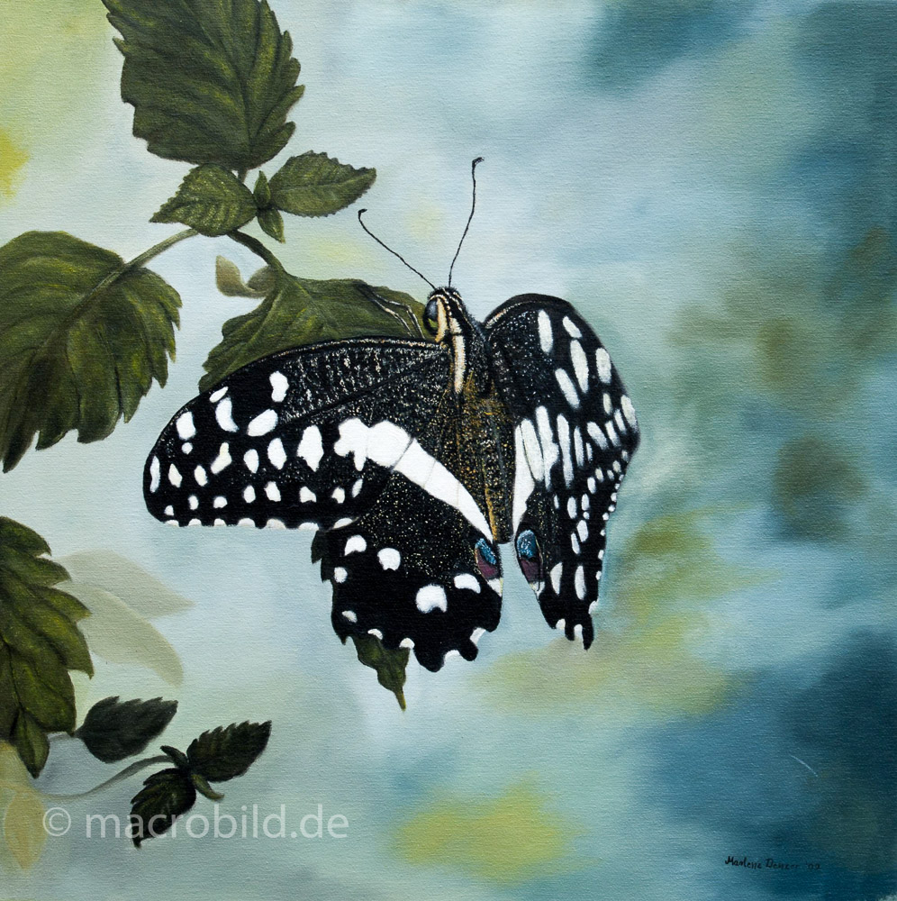 Schmetterling_50x45
